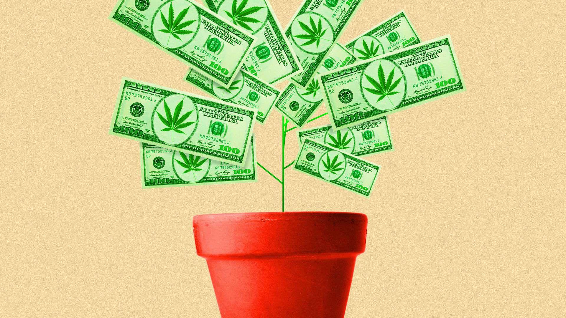 Cannabis Startups